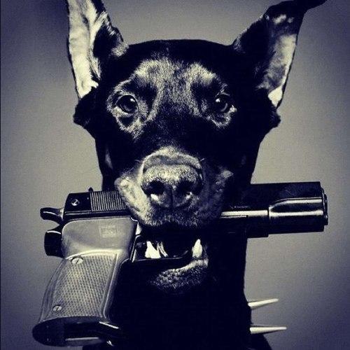 dog-gangsta-gangster-gun-Favim.com-893317