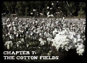 Chapter 7 - The Cotton Fields